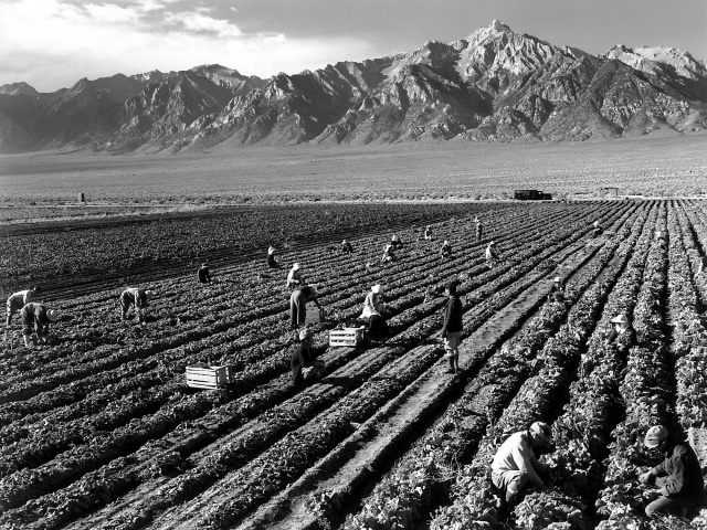 Ansel Adams (1943) Farm workers and Mt. Williamson